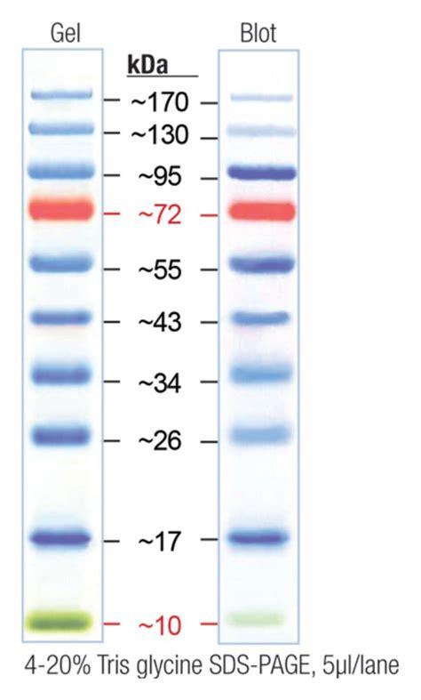 protein ladder ez run prestained rec protein ladder