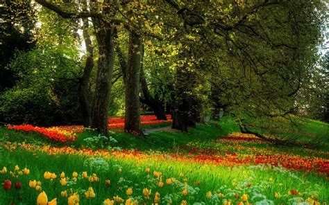 background green park london flower glade in the park wallpapers and images