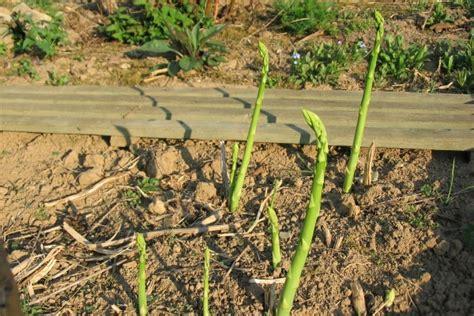 gehalt garten und landschaftsbau bayern gr 252 nspargel k 246 niglicher genuss aus dem garten
