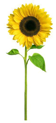 Peel And Stick Kitchen Backsplash Ideas 1000 images about sunflower hospice on pinterest