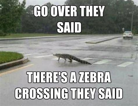 Gator Meme - good guy gator meme daily picks and flicks