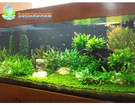 design untuk aquascape pin dekorasi aquarium air tawar on pinterest