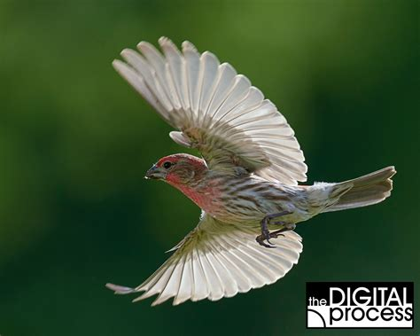 backyard bird photography get the shot backyard bird photography