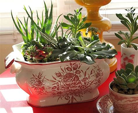 how to make an indoor succulent dish garden indoor succulents dish garden and succulents