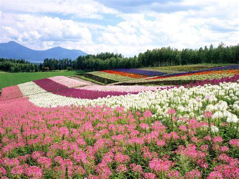 paesaggi di fiori sfondo quot striature di fiori quot 1600 x 1200 paesaggi mare