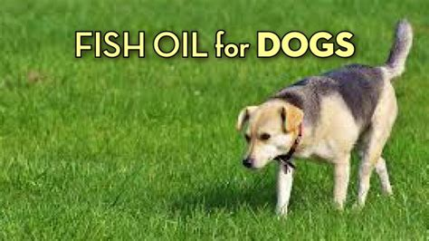 best fish for dogs the best fish for dogs 5 highly effective products
