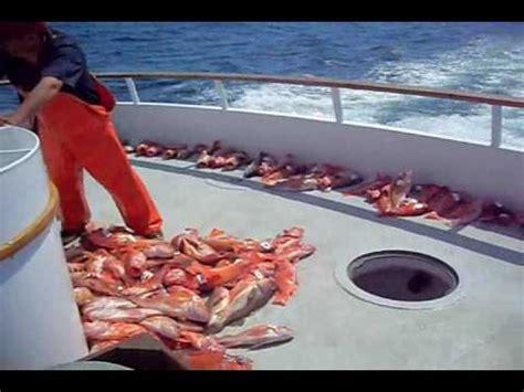 download mp3 gratis gigi ikan laut rahsia memancing ikan merah di laut hd vidoemo