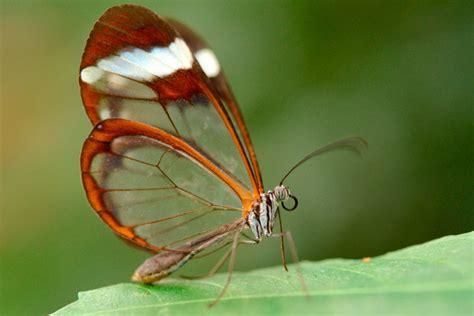 Imagenes Mariposas De Cristal | imagenes de mariposas de cristal im 225 genes y fotos