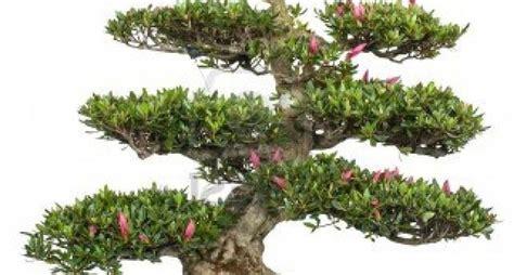 vasi per bonsai economici costo bonsai tecniche di giardinaggio