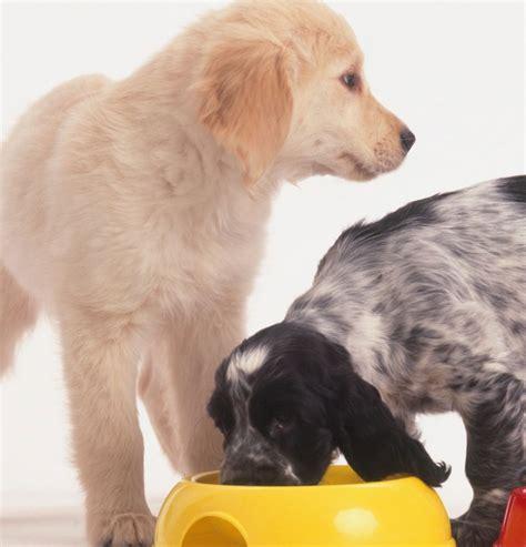 alimentazione animali domestici animali domestici spesa cibo vola a oltre 2 miliardi di