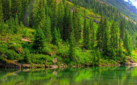 imagenes de bosques verdes fondos hd wallpapers fondo de pantalla naturaleza bosques