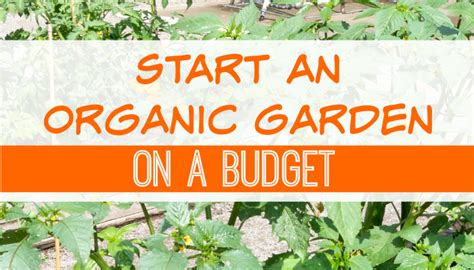 how to start an organic vegetable garden in your backyard how to start an organic garden in your backyard 28