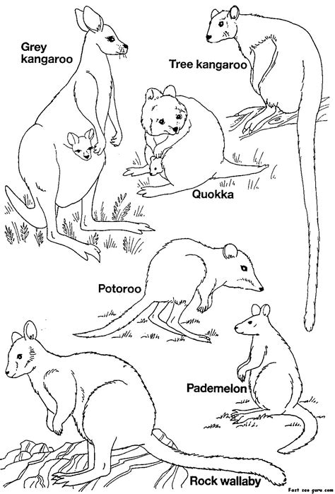 printable australian animals coloring pages printable