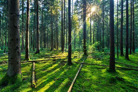 Morning Sun Rabbit Food Alfalfa Grass conte de f 233 es for 234 t sunburst en bois d 233 pic 233 a naturel