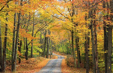 picture leaf wood tree landscape nature road
