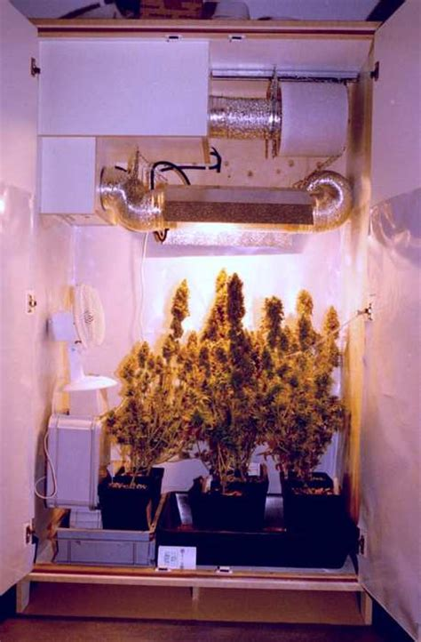 Closet Grow Room Setup by Small Room Design Small Grow Room Setup Ideas Indoor Grow
