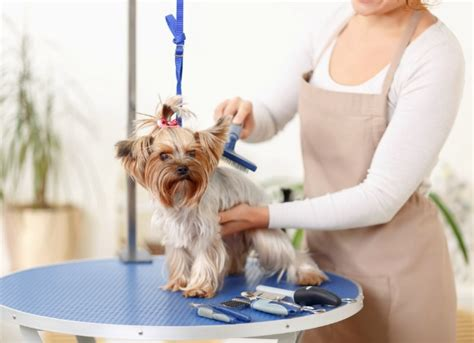 how much to tip a groomer safety tips for the professional groomer petmd