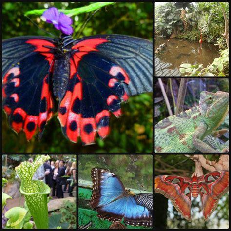 indoor butterfly garden uk indoor tropical gardens