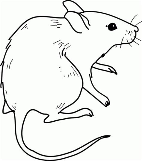 imagenes de ratas halloween pintemos los ratones colorear im 225 genes