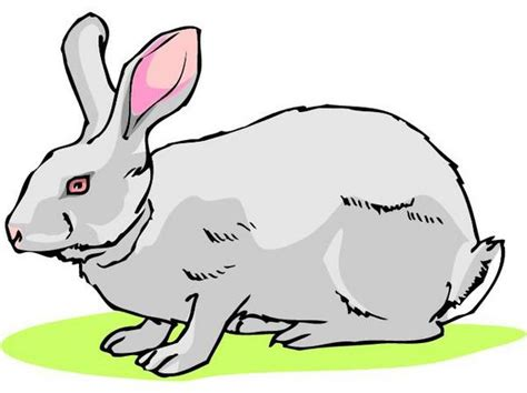 R Rabbit r is for rabbit and other useful terms related to homes