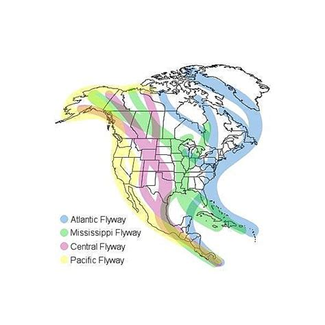 america bird migration map bird migration quotes quotesgram