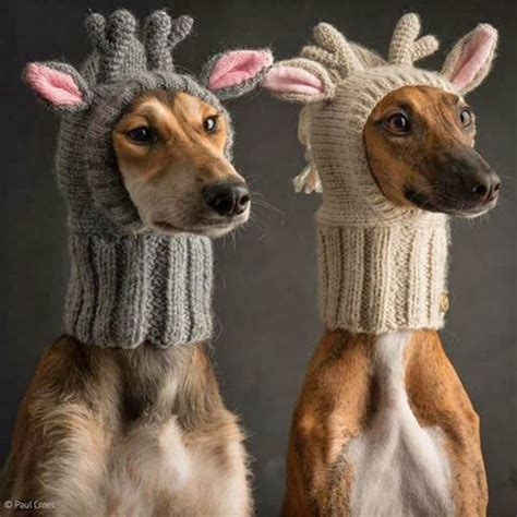 knitted hats for dogs my handmades deer with antlers hat