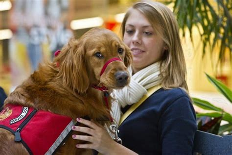 service dog housing laws service dog laws know your rights when you own a service dog