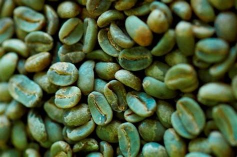 Green Coffee Premium Arabica Aceh green arabica coffee beans id 6963947 product details view green arabica coffee beans from j
