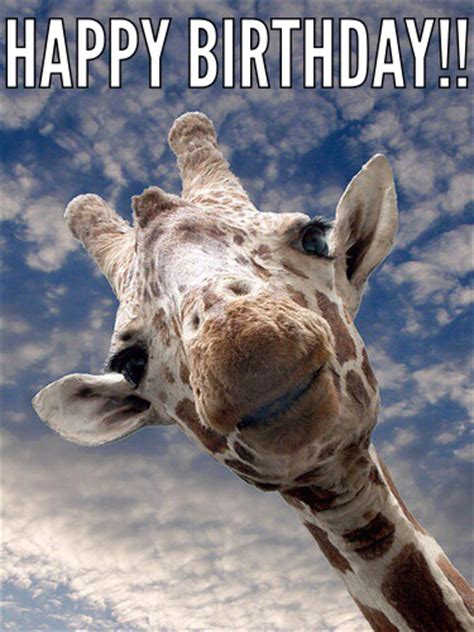 Giraffe Hat Meme - giraffe birthday memes greetings pinterest giraffe
