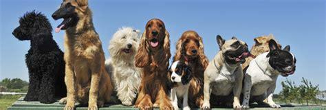 best top chions breeds archives gublog gudog uk