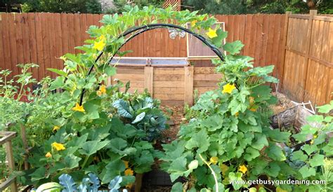 Small Home Vegetable Garden Ideas Small Vegetable Garden Design For Small House Guide Mybktouch