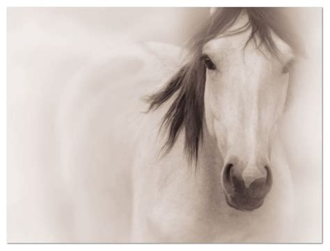 horse photography on canvas large wall art traditional