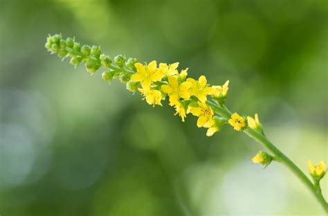 fiori di bach elenco e loro propriet 224