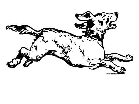 dog running coloring page coloring running dog