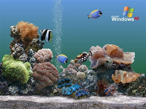 imagenes de fondo de pantalla xp fonditos acuario plus computadores windows xp