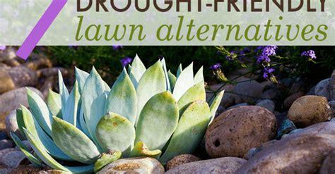 lawn alternativesdesign 7 beautiful drought friendly lawn alternatives inhabitat