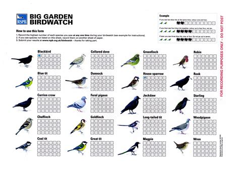 Rspb Great Garden Birdwatch Results Are In by Birdwatch Results Sheet Photo Page Everystockphoto