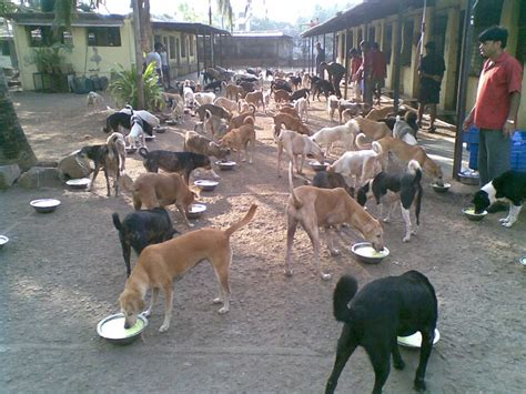 dogs india 10 best images about communal housing dogs on
