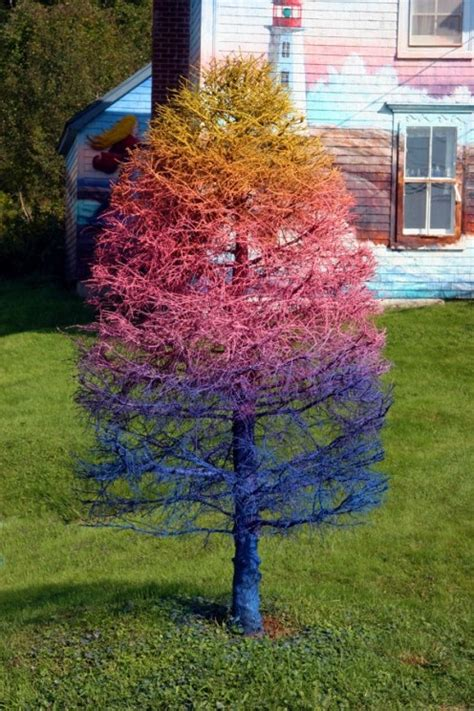 sprayed painted christmas trees 19 best images about spray paint dead tree on