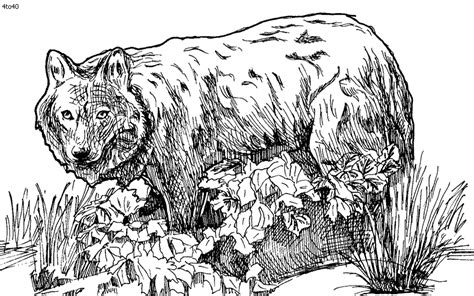 endangered species coloring pages wolf coloring page