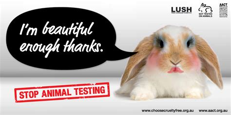 Reasons For Animal Testing by Reasons To Stop Animal Testing Cus