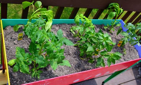 How To Start Your Own Back Porch Veggie Garden Miss How To Start Your Own Vegetable Garden