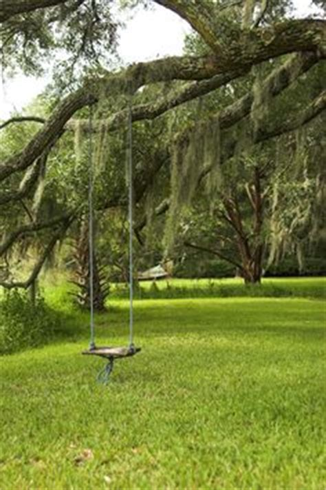 swing hanging from tree 1000 images about tree swing on pinterest tree swings