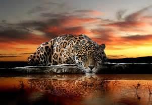 Wall Mural Prints wild cat jaguar wall murals for wall homewallmurals co uk