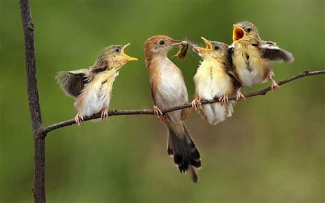 p 193 jaros aves tipos y nombres de p 225 jaros explicados uno