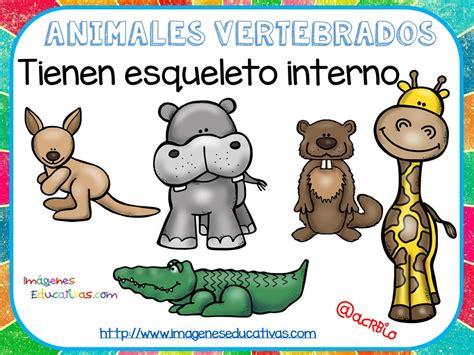 imagenes educativas animales tipos de animales claseficaci 243 n 2 imagenes educativas