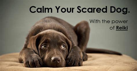 fearful dog