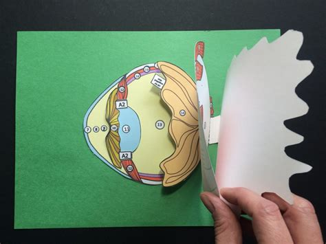 How To Make A Paper Eye - why you should use 3 d paper dissection models for