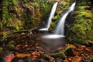 Latest Flowers Photo Gallery - dartmoor tropical waterfall by neil porter digital