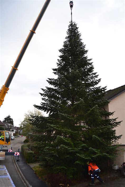 tannenbaum selber schlagen bonn weihnachtsbaum fallen bonn europ 228 ische weihnachtstraditionen